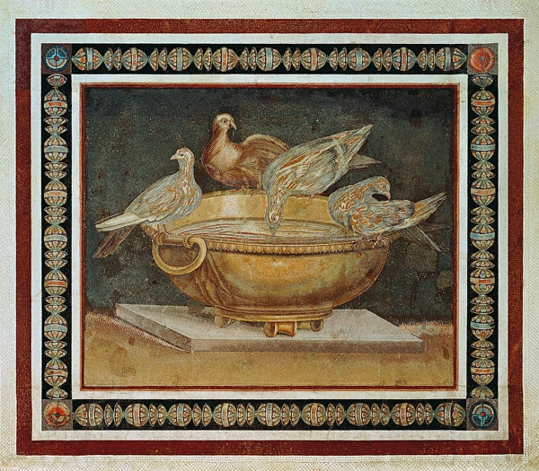 Doves of Pliny.jpg