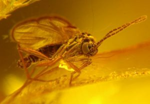 Ancient Insects are Often Preserved in Amber.